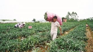 产业兴农 增收惠农