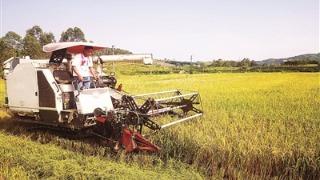 我市大力推进水稻种植机械化